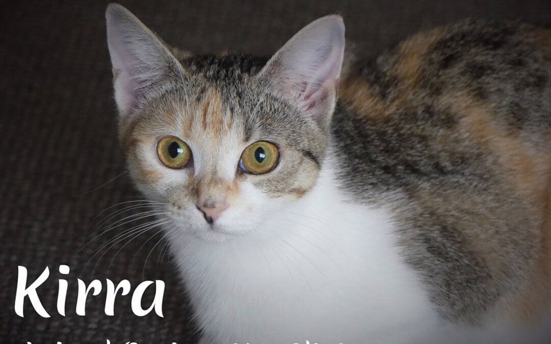 Kirra- Seeking a furever home