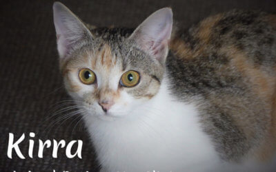 Kirra- Seeking a furever home