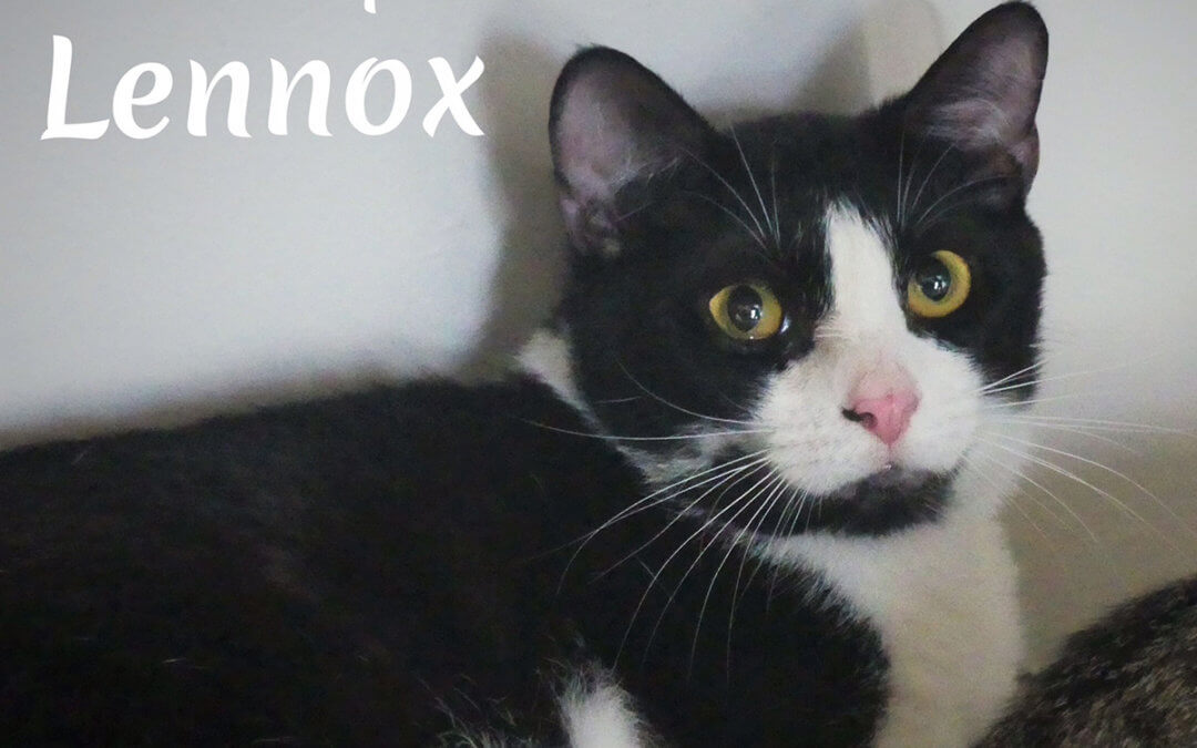 Lennox – Looking for love