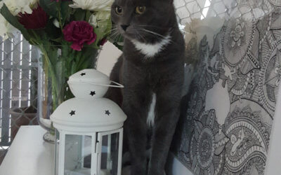 Moon – I'm very cuddly and sweet